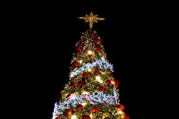 Juletræ_845x592px